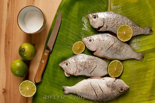 Badha fish asri flickr for Kumak s fish