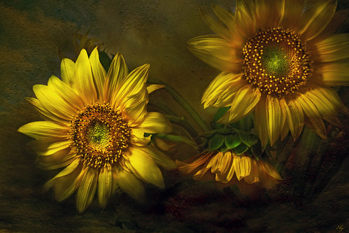 Painterly Sunflowers | by 29dreamcatcher29