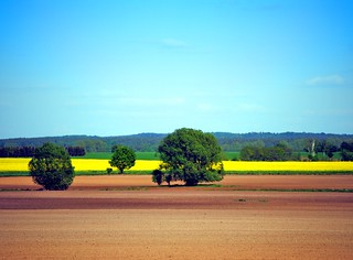 Landscape with trees | by Tobi_2008