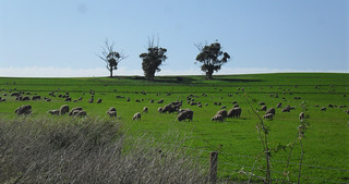 Beautiful Winter afternoon, Barossa Valley | by Bern_Aussielicious