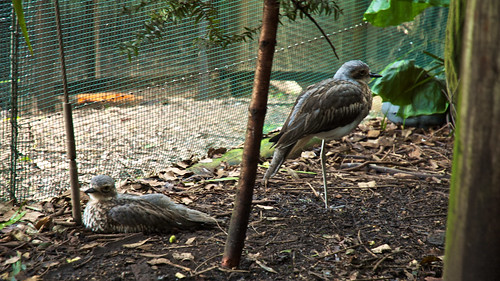 Birds at the Walkabout Creek wildlife centre | by somebear