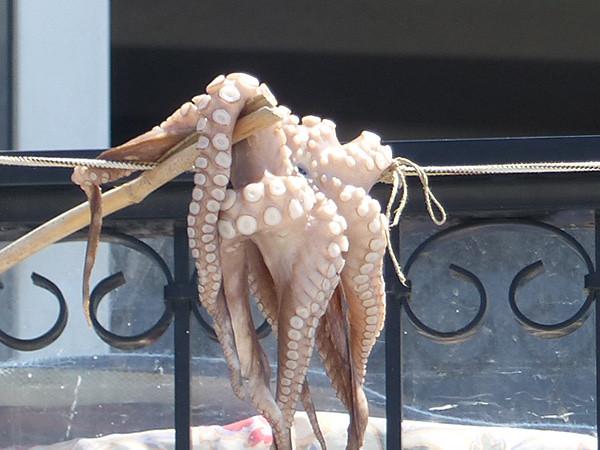 un poulpe à Paros