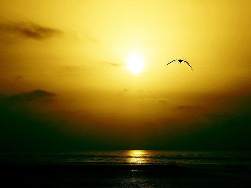 The free world of Jonathan Livingston Seagull | by Inatil