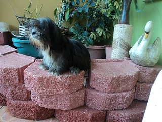Hijo de Cleo | by Dream Kennels