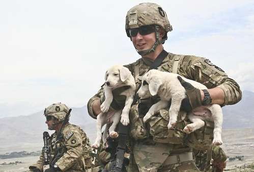 Puppy carry | by The U.S. Army