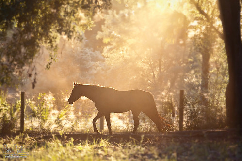 Horse at Sunset | by Seth Christie