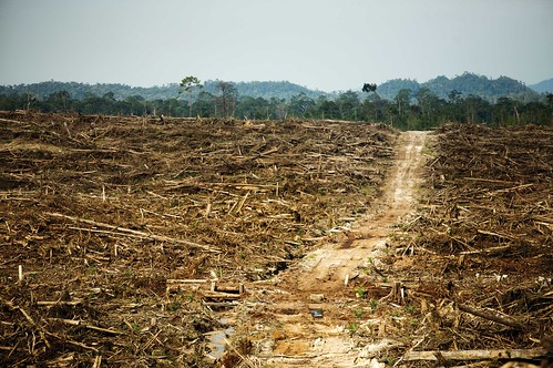 Cargill's Problems With Palm Oil | by Rainforest Action Network
