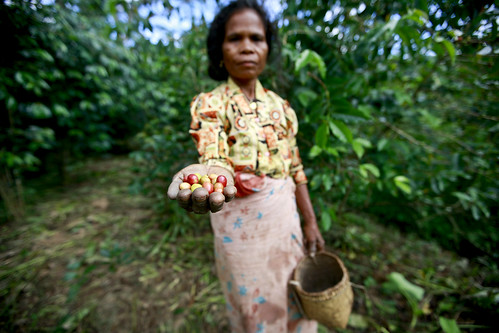 Coffee Pickers in Timor-Leste | by United Nations Photo