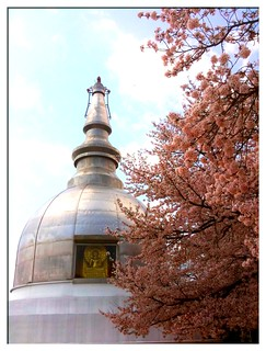 Sakura at the Peace Pagoda | by littleforeigner