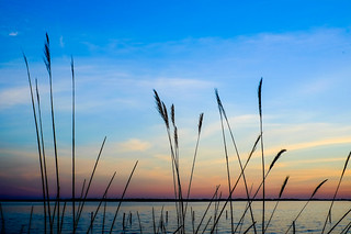 Reeds and Sunset | by notnyt