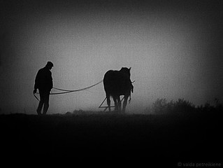 126. May the 5th. Country Life. Even at Night They Work... | by <vaida>