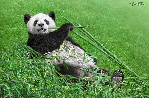 Bamboo Right in my Stomach! | by Ben Heine