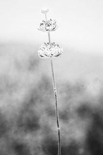 Tall [Black and White] | by edwardconde