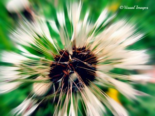 Blowin in the wind | by Visual Images1 (Thanks for over 4 million views)