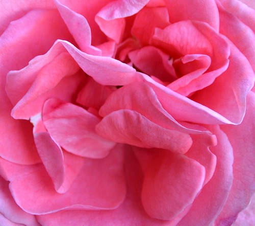 Rose Macro | by GemElle Photography - off & on sorry