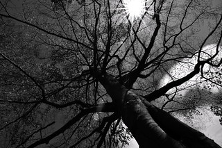 Mono Look Up | by R Digi