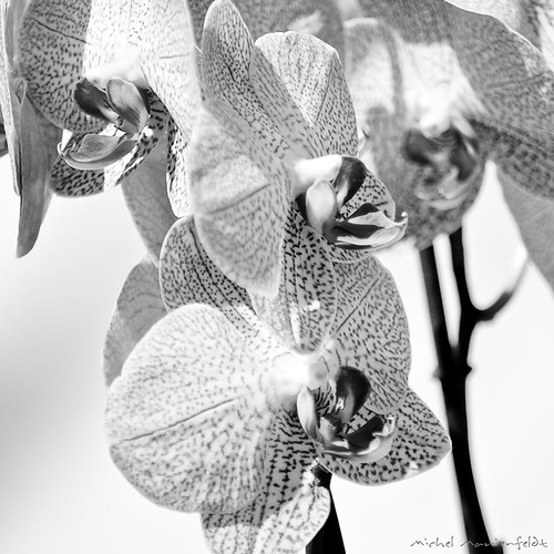 Orchidée | by telomi