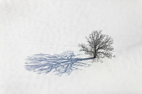 Oak In The Snow | by Aerial Photography
