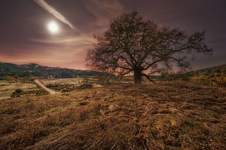 Luna and live oak in the east hills | by kern.justin