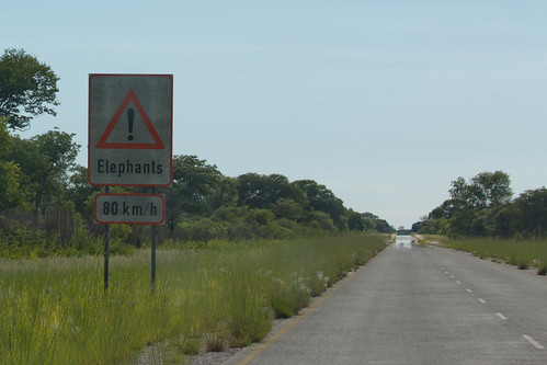 Danger, very fast elephants | by smagdali