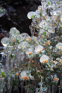 Floral Ice Globes | by Reptilian_Sandwich