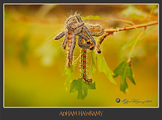 Hungry Caterpillars | by ADHAM HAWRAMY