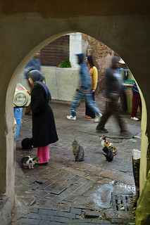 patient cats awaiting butcher's scraps - Fes, Morocco | by Phil Marion