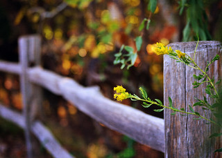 Fence at Oak Mountain {Explored} | by eRachel11