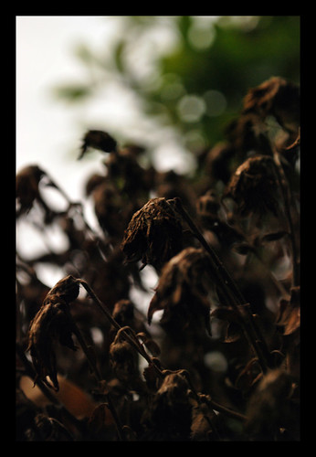 Weeds II | by The Aberrant Eye