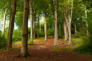 Blaize wood | by Life-Photography