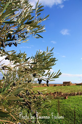 olive tree... | by Ioanna Fisilani