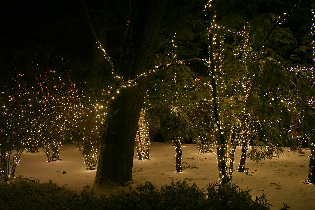 toledo zoo christmas lights magical woods by marylea - Toledo Zoo Christmas Lights