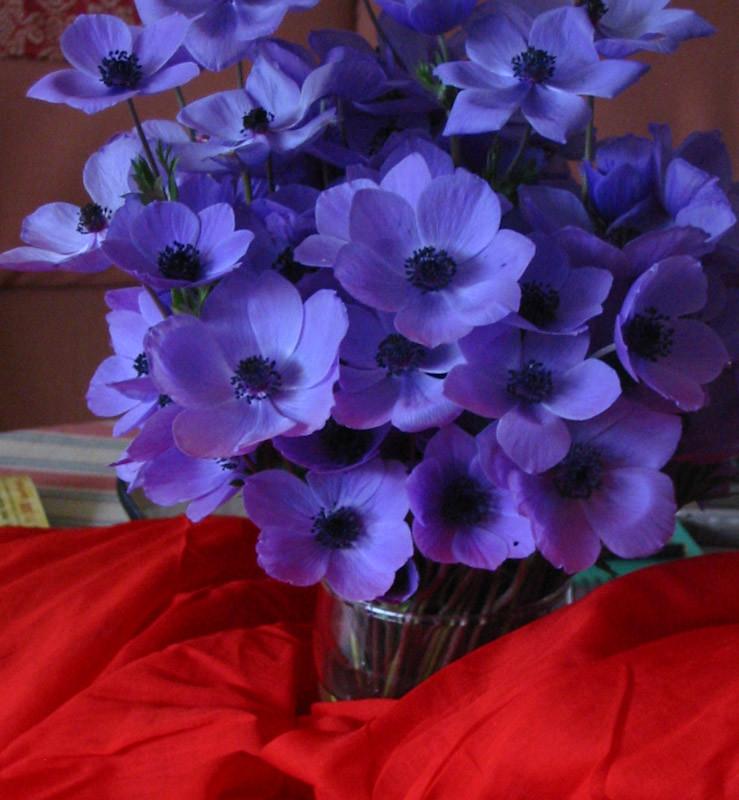 Resultado de imagen para anemona flor