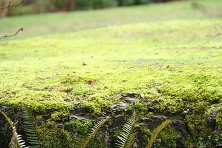 Lawn of moss | by Ruth and Dave