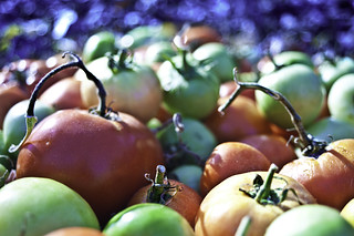 Tomatos | by Thelonious Gonzo