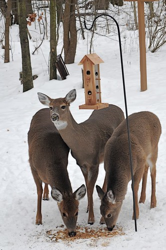 201 - Deer | by Benny the Icepick