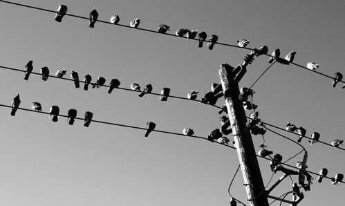 like birds on wires | by ruffin_ready