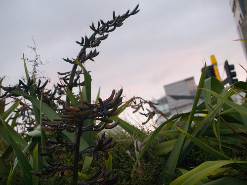 Flax at Waitangi Park by Rebecca Cox