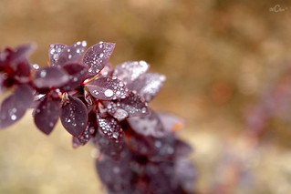 Drops and colour | by mirela christine2010- in love with beauty