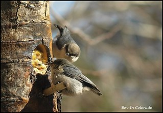 Greedy, Sticky Beaks ! | by Bev In Colorado USA