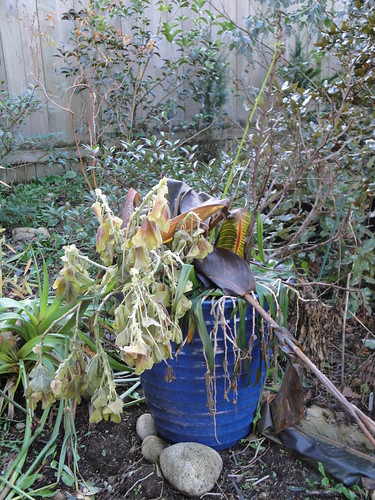 Seasonal Container after cold snap | by RHR Horticulture