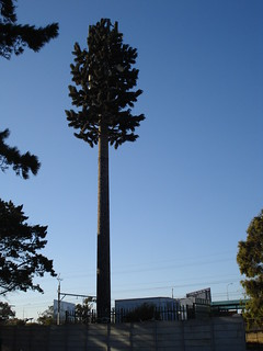 Cellular Mast Disguised as a Tree | by barbourians
