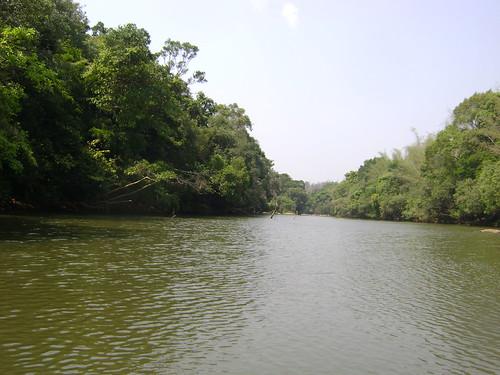crocodile river in kuruva island wayanad this
