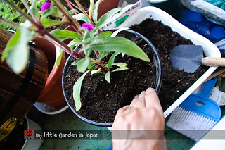 How-to-plant-in-a-container-1 | by delcasmx