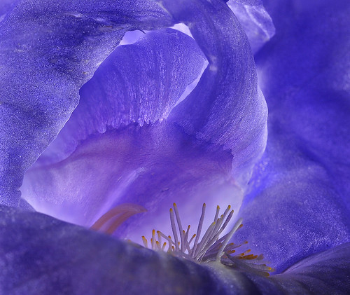 Deep Inside the Iris Cave | by Bill Gracey 16 Million Views