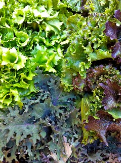 Organic Escarole, Kale and Curly Mustard | by McEvoyRanch
