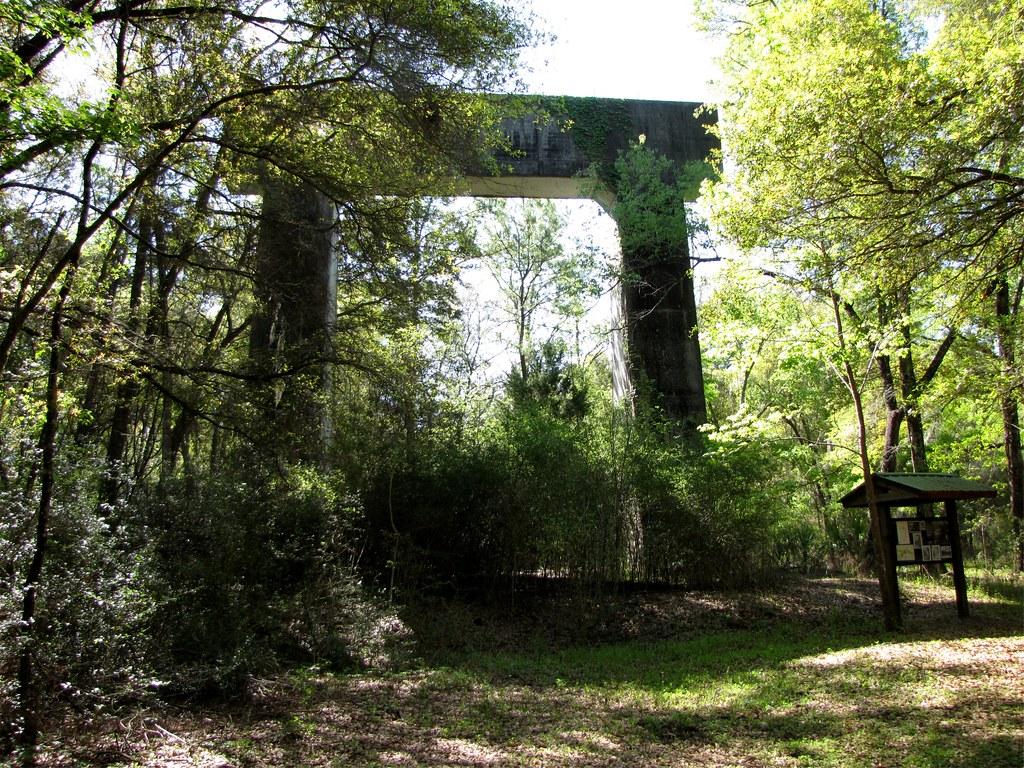 Florida Swamp Wallpaper