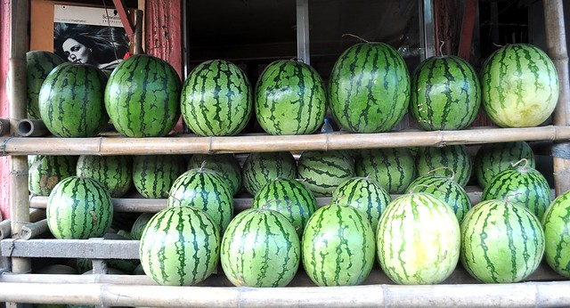 SHINING WATERMELONS