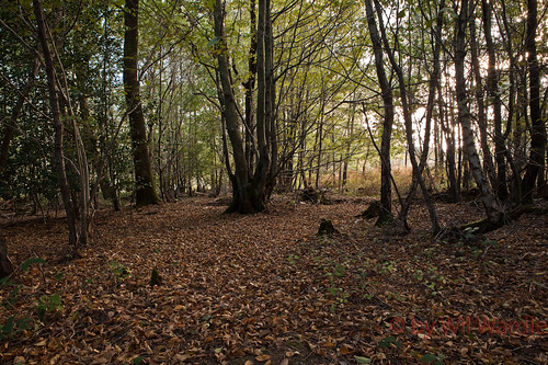 Abbots Wood #1 | by Wil Wardle