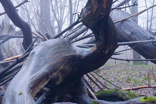Dew Wet Dead Twisted Tree with Mist | by Dominic's pics